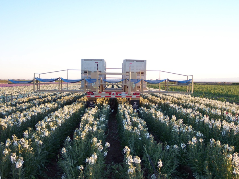 Rear View of the Fold-out Harvesting Platform on Denair Trailer